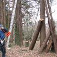 チルホール(ルーパー)倒木吊上げ