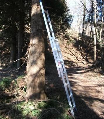 梯子(長谷川2連LH2-40)