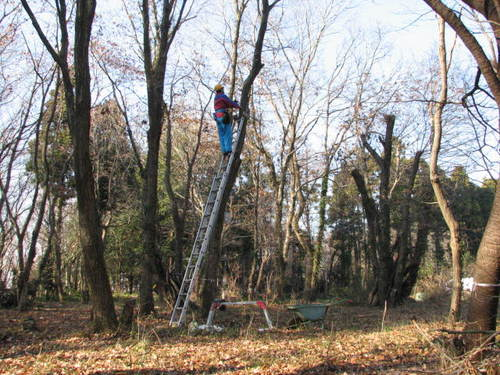 梯子の安全対策1