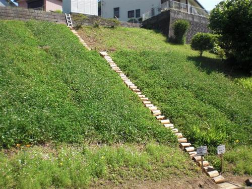 障害木で法面階段