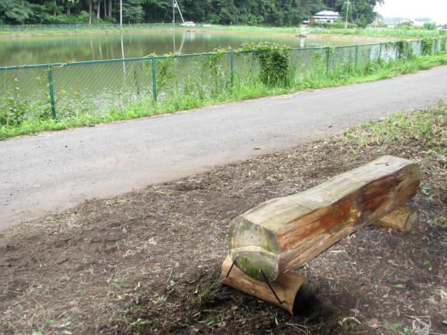 風倒木で丸太ベンチ
