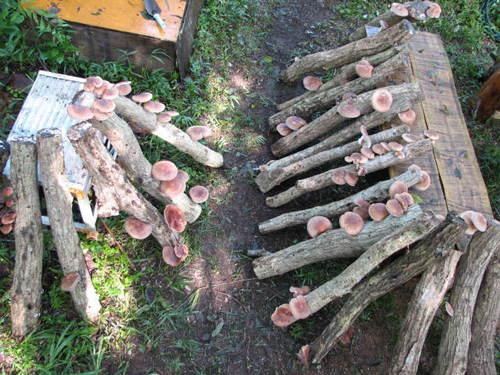 間伐材できのこ栽培