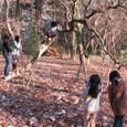 木登り体験木