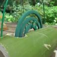 竹蚊取り-4