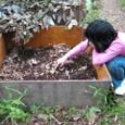 昆虫飼育箱
