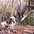木登り変形木