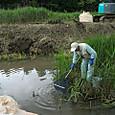 農業水路の生き物救出