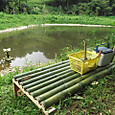 池を見る竹の縁台完成