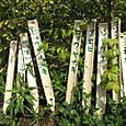 植物の名札立て