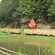稲刈り終わる