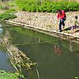 竹で魚取り体験場作り
