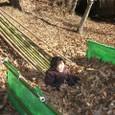 冒険林/落ち葉プール