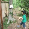 冒険林/竹刀
