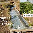 里山/暮レソン栽培