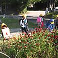 バス停花壇今年も開花