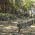 伐採竹置き場