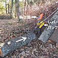 伐木の引っ張り法