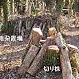 伐木の片付け