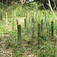 竹の腰高伐採