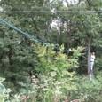 電線とホースを林内に延長